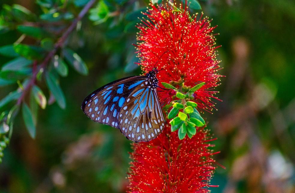 Tropische Schmetterlinge erleben Kinder im Schmetterlingshaus in Milano Marittima hautnah. Für Familienreisen ist dies ein unvergessliches Erlebnis. (#1)