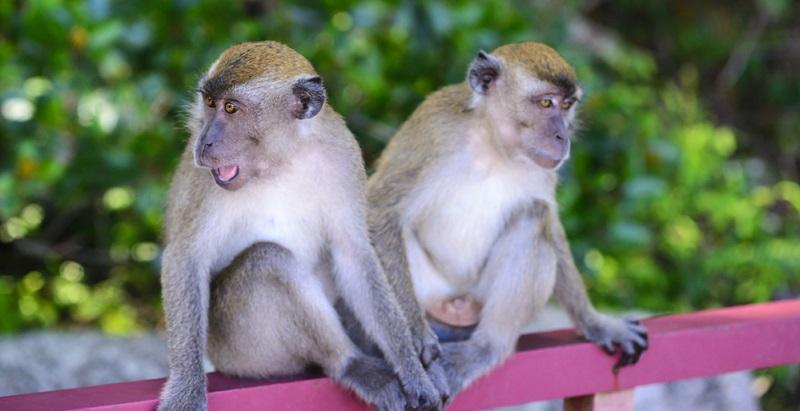 Wenn Sie einen Affen kaufen, müssen Sie beachten, dass Sie damit eine große Verantwortung eingehen.
