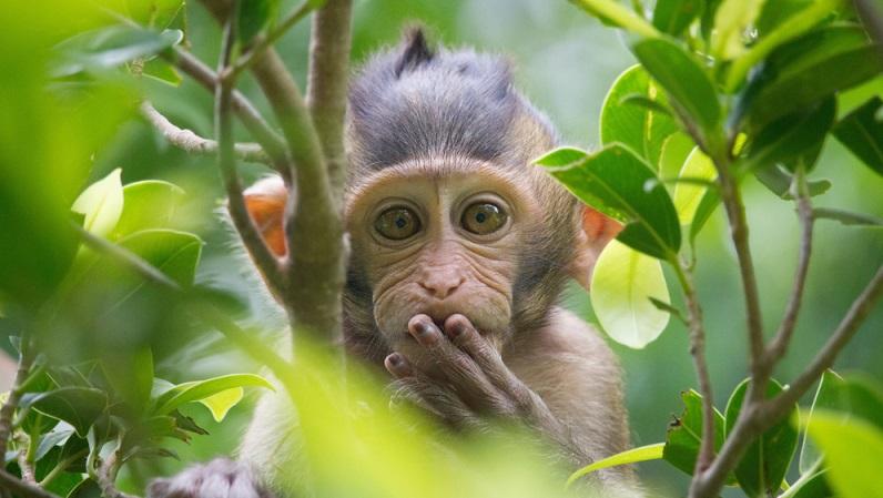 Da die Haltung von Affen als Haustier nicht üblich ist, gehen viele Menschen automatisch davon aus, dass diese verboten sei.