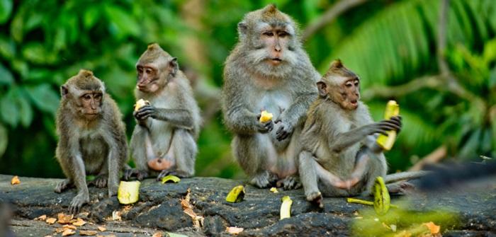 Affen kaufen: Das sind die Vorschriften